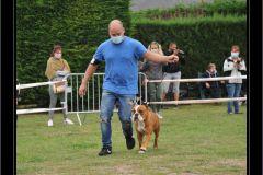 Les Belles Truffes - Bulldog Continental - Expositions 2020