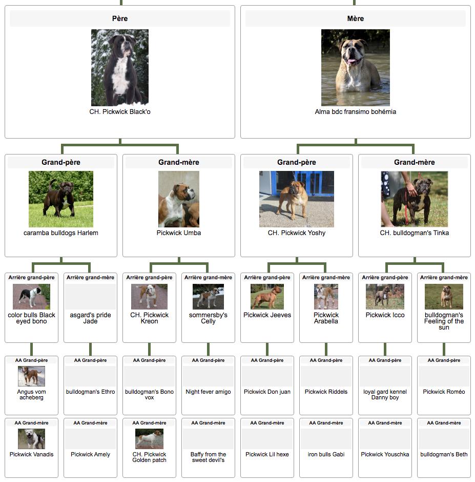 Les Belles Truffres - Elevage - Bulldog Continental - Femelle - Never Say Good Bye des Jardins d'Eywa - Pédigrée