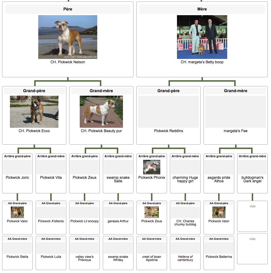 Les Belles Truffes - Elevage - Bulldog Continental - Mâle - Nash des Sources Sacrées - Pédigrée