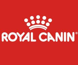 Les Belles Truffes - Bulldog Continental - Boxer - Royal Canin