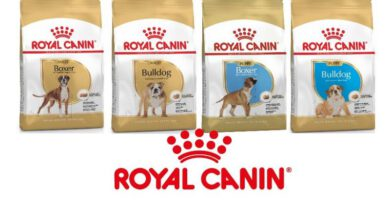 Les Belles Truffes - Bulldog Continental - Boxer - Royal Canin - Une