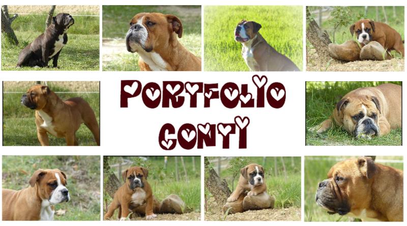 Les Belles Truffes - Elevage - PortFolio Bulldog Continental