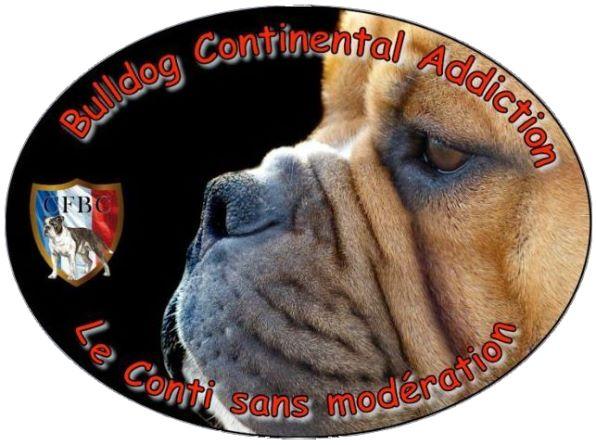 Les Belles Truffes - Groupe Facebook - Bulldog Continental Addiction