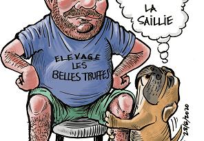 les belles truffes-bulldog continental-saillie