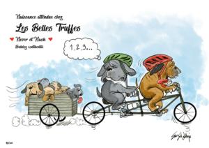les belles truffes-bulldog-continental-naissance